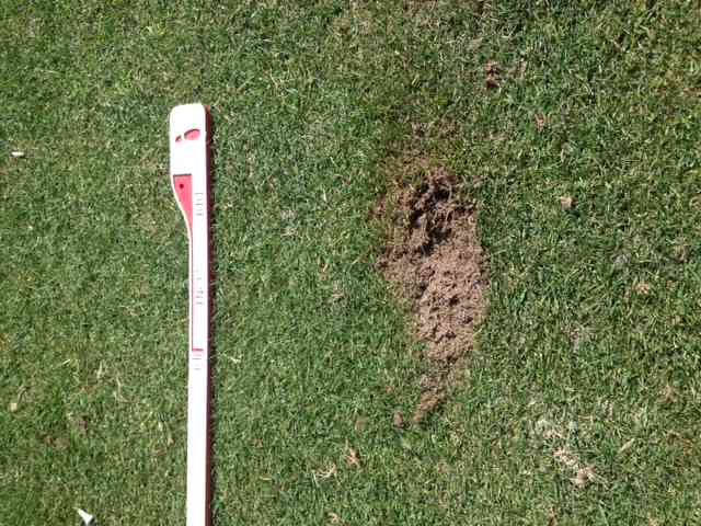 Example of Divot I made with a 4 Hybrid